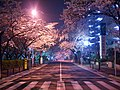 Unknown road at night, Japan; March 2013.jpg