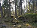 Urskogsstigen, Tyresta nationalpark, 6-4-2019.jpg
