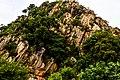 Végétation saxicole verdoyant à Tanguiéta.jpg
