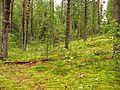 Vabole Parish, Latvia - panoramio (2).jpg