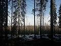 Vahteriston luonnonsuojelualue.jpg