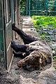 Veronika Leonets Центр реабілітації бурого ведмедя Синевир Карпати Україна 01.jpg