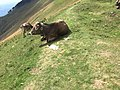 View from the footpath between Alpe d'Orimento and Monte Generoso westwards.jpg