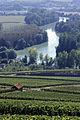 Vigne Pinot noir (Vue sur la Marne) Cl.J.Weber09 JPG. (23595224571).jpg