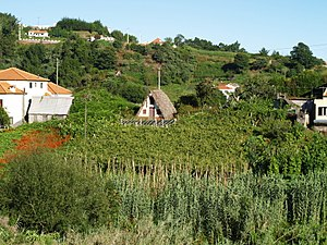 Madeira wine - Vineyard growing among other cultures in the tropical influenced climate near Santana, Madeira.