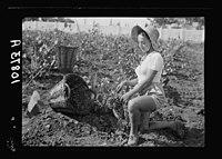 Vintage activities at Richon-le-Zion, Aug. 1939. Grape picker, close up study European immigrant girl LOC matpc.19767.jpg