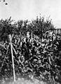 Virginia Walker, La Grande, Oregon and her garden, 1918. (7262889006).jpg