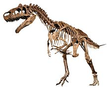 WLA hmns Allosaurus White Background.jpg