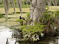 Wakulla-springs 2009-05-04T19 33 01.jpg