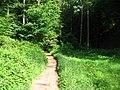 Wald-Lichtung - geo.hlipp.de - 2580.jpg
