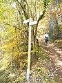 Waldweg unter den Dolomiten - geo.hlipp.de - 6525.jpg