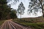 Wandelen over de Planken Wambuis vanuit Mossel 04.jpg