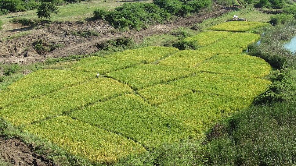Warangal IMG 4286