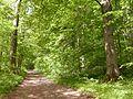 Weg den Berg hinauf durch den Buchenwald, Kleiner Gleichberg, Thüringen.jpg