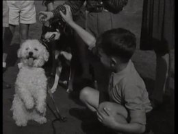 Bestand:Wereld dierendag hondenshow kinderen met hond-521383.ogv