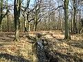 Whitmoor Common - geograph.org.uk - 696861.jpg