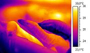 Thermographic image of a monitor lizard.