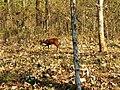 Wildlife's @ Bandipur Tiger Reserve - panoramio (2).jpg