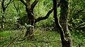 Wilsumer Moor.jpg