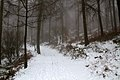 Winter Path (6822200635).jpg
