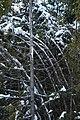 Winter forest scenery Drummond Island - 49367877293.jpg