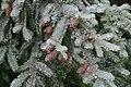 Winter in Western Oregon (23865987571).jpg
