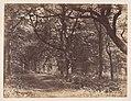 Wood-scene, Norton, Cheshire MET DP209233.jpg