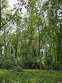 Woods north of Heathfield - geograph.org.uk - 802423.jpg