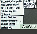 Xenomyrmex floridanus casent0000499 label 1.jpg