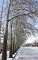 Yadbood Park of Borujerd.jpg