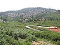 Yercaud town hill road.jpg