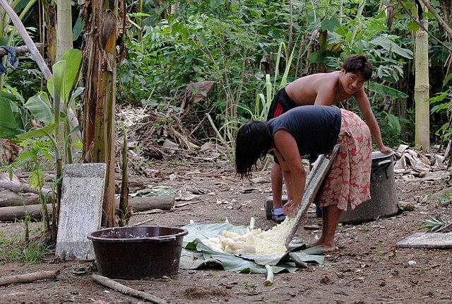 Proceso de la Yuca en comunidad amazónica Comunidad Sanama Venezuela