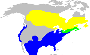 White-throated sparrow - Image: Zonotrichiaalbicolli s habitat