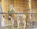 Zoo Augsburg 12.jpg