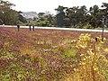 """Green Roof"" of California Academy of Sciences - ""Telhado Verde"" California Academia de Ciencia - panoramio.jpg"