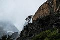 Árbol en la roca.jpg