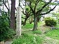 Ōmi Kokubunji Temple ruins.jpg