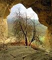 Ак Кая - Белая скала, Большой грот, Боярышник на входе.jpg