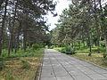 Ботанічний сад ДНУ 12.JPG