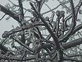 В ледяном плену.jpg