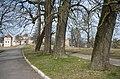 Група вікових дубів і лип в парку Свірзького замка.jpg