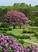 Криворізький ботанічний сад - Японский мотив.JPG