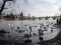Лебеди - panoramio (4).jpg