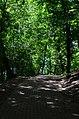 Парк Берёзовая роща в Киеве. Фото 22.jpg