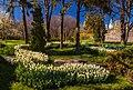 Печерський ландшафтний парк - 01 - цвітіння тюльпанів на Співочому полі.jpg