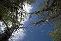 Плавневий ліс.jpg