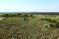 Поля в Соль-Илецком районе - panoramio.jpg