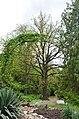Рослини ботанічного саду у Кам'янець-Подільському.jpg