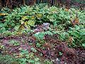 Свалка мусора в лесу.jpg