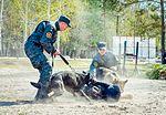 Собаки НГУ 4301 (19358759331).jpg